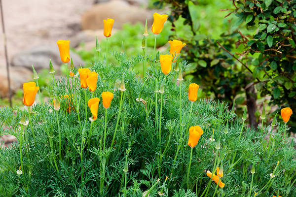 Photograph - Bouquet Of Orange by Melinda Ledsome