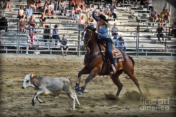 Prca Wall Art - Photograph - Bovine Cowgirl by Gary Keesler