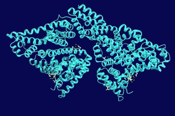 3d Visualization Photograph - Bovine Serum Albumin by Ella Maru Studio / Science Photo Library