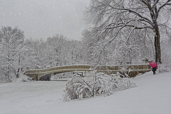 Photograph - Bow Bridge In Central Park During Snowstorm by Susan Candelario