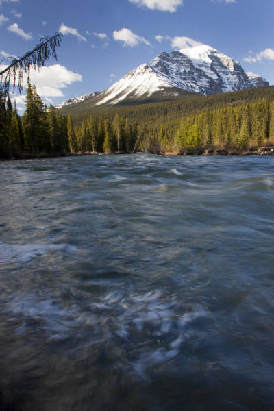 Photograph - Bow River At Lake Louise by Tony Mills