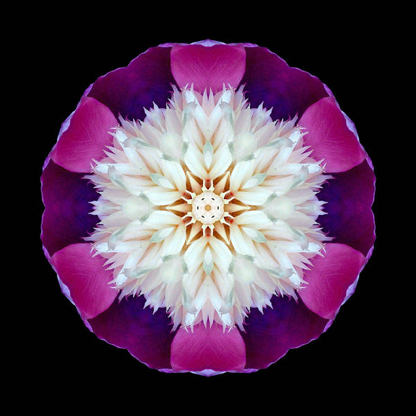 Photograph - Bowl Of Beauty Peony II Flower Mandala by David J Bookbinder