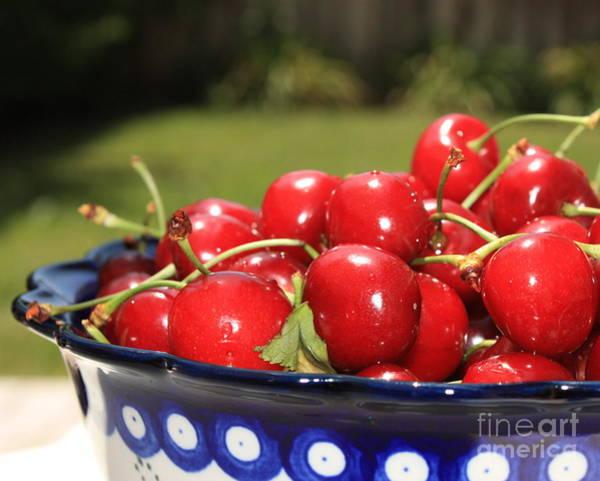 Photograph - Bowl Of Cherries In The Garden by Carol Groenen