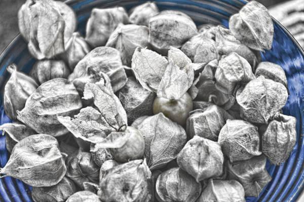 Photograph - Bowlful Of Ground Cherries by Sharon Popek