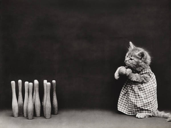 Kitties Photograph - Bowling Alley by Aged Pixel