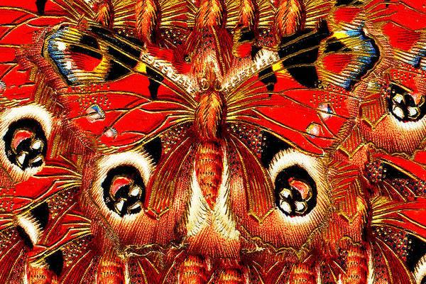Journalist Digital Art - Box Butterfly by Bruce Iorio