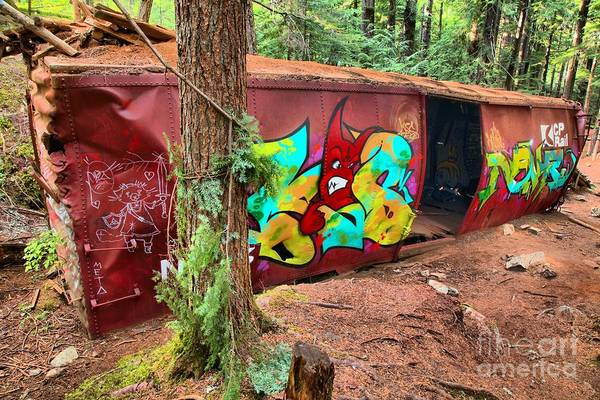 Photograph - Box Car In The Woods - British Columbia by Adam Jewell