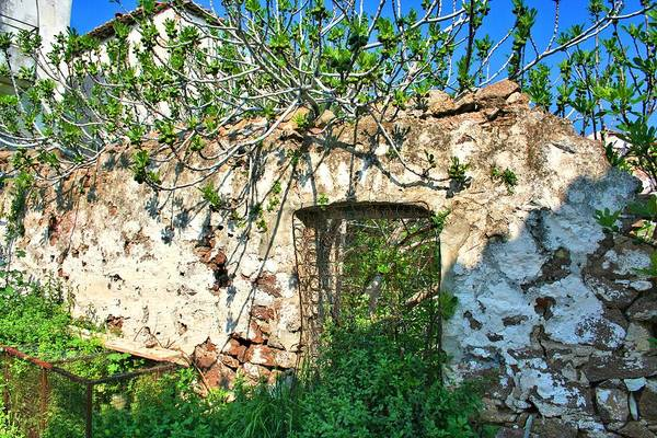Photograph - Box Spring Gate In Old Stone Wall by Gordon Elwell