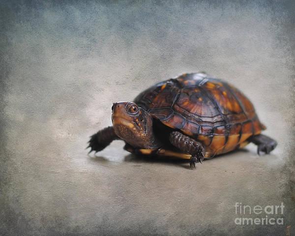 Box Turtle Photograph - Box Turtle by Jai Johnson