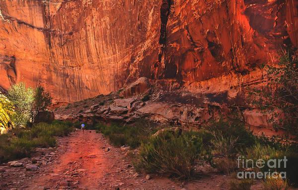 Box Canyon Wall Art - Photograph - Boxed Canyon by Robert Bales