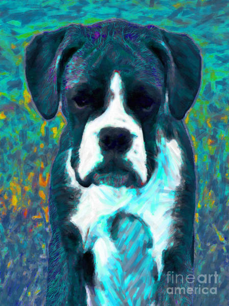 Photograph - Boxer 20130126v4 by Wingsdomain Art and Photography