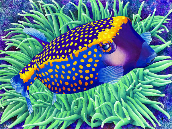 Polka Dots Photograph - Boxfish Berthold by MGL Meiklejohn Graphics Licensing
