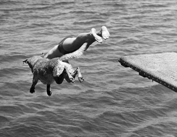 Jumping Photograph - Boy And His Dog Dive Together by Underwood Archives