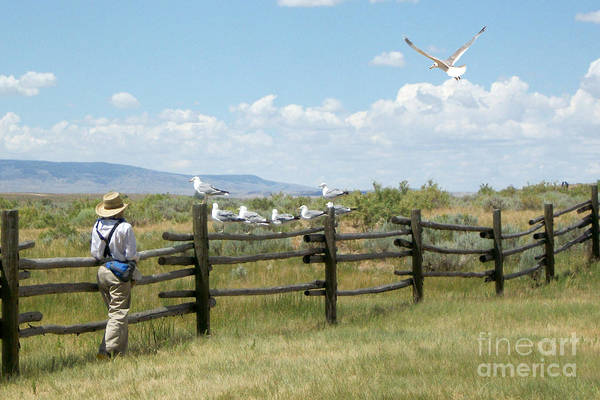 Photograph - Boy And Seagulls by Cindy Singleton