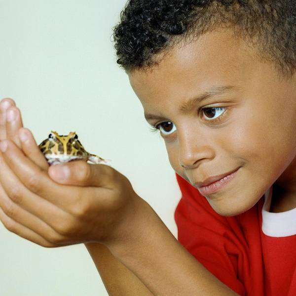 Pet Care Photograph - Boy With His Pet Toad by Richard Bailey/science Photo Library