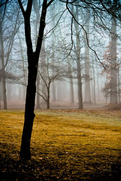 Photograph - Boyertown Community Park by Trish Tritz