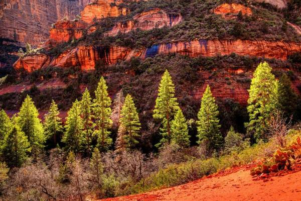 Photograph - Boynton Canyon by Walt Sterneman