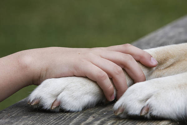 Boy's Hand Resting On His Dog's Paw Art Print by Compassionate Eye Foundation/Jetta Productions
