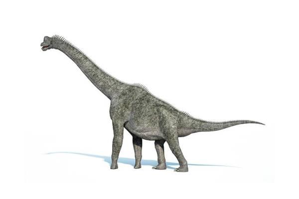 Wall Art - Photograph - Brachiosaurus Dinosaur by Leonello Calvetti/science Photo Library