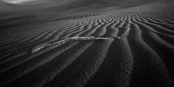 Photograph - Branch Out In The Desert by Peter Tellone