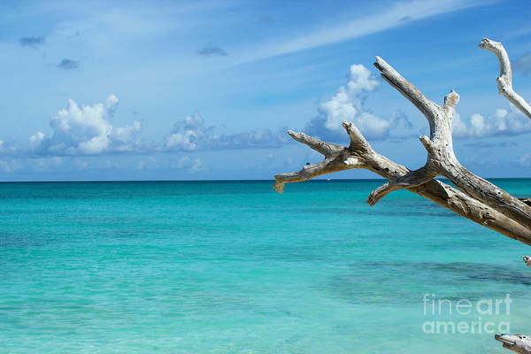 Branch Over The Caribbean Art Print