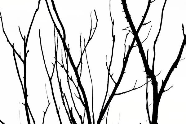 Photograph - Tree Branches by Aidan Moran