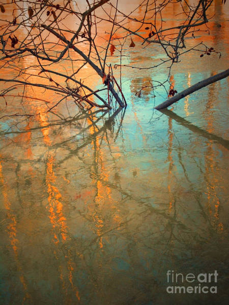 Photograph - Branches And Ice by Tara Turner