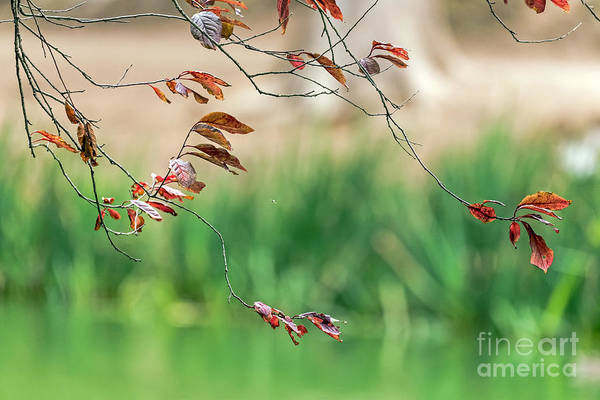 Photograph - Branches And Leaves by Kate Brown