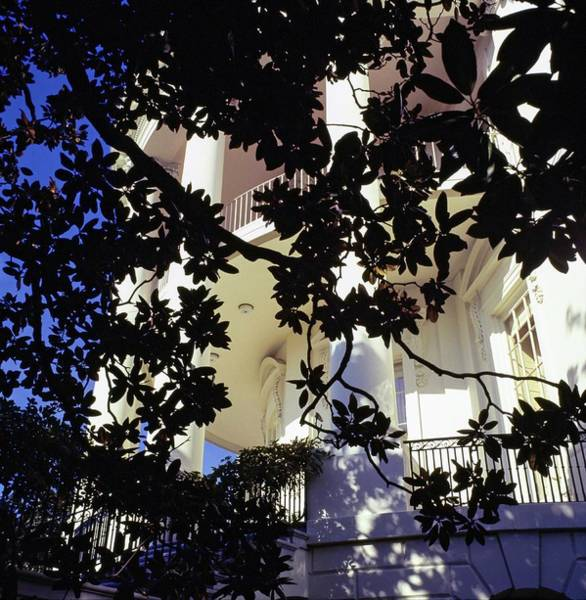 President Photograph - Branches By The White House by Horst P. Horst