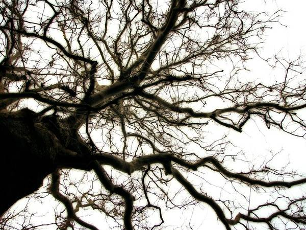 Photograph - Branches by Michelle Calkins