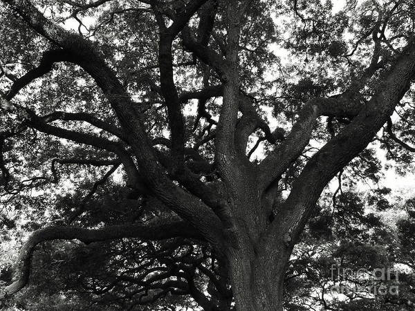 Photograph - Branches Of Life by Andrea Anderegg