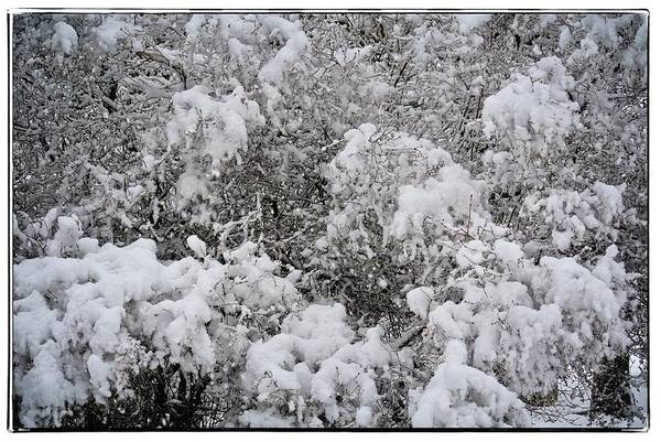 Bonneville County Photograph - Branches Of Snow by Image Takers Photography LLC - Carol Haddon