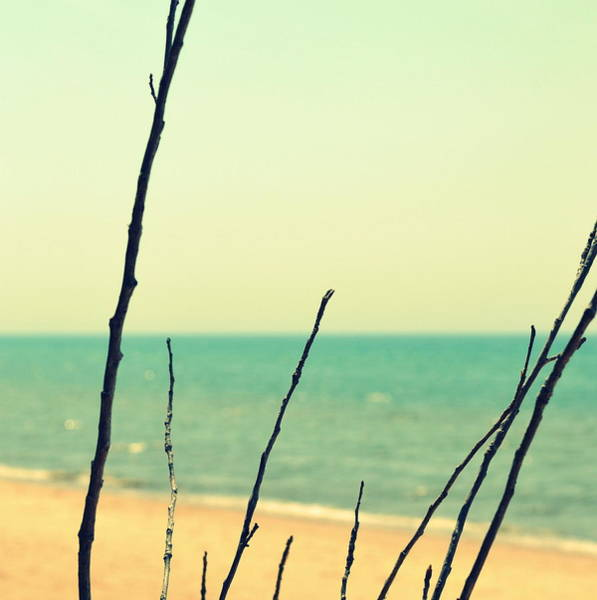 Branches On The Beach Art Print