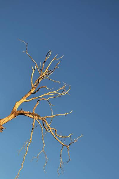 Photograph - Branches by Randal Bruck