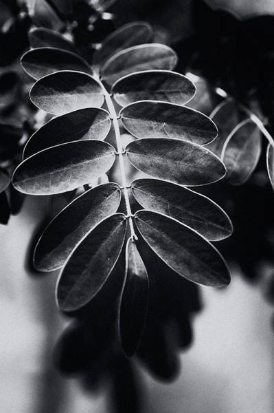 Photograph - Branching Out by Christi Kraft