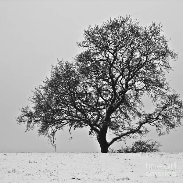 Photograph - Braving The Cold by Heiko Koehrer-Wagner
