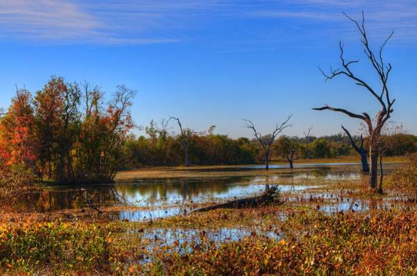 Brazos Bend State Park Wall Art - Photograph - Brazos Bend Swamp by David Morefield