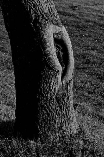 Knot Hole Photograph - Break In The Skin by Odd Jeppesen