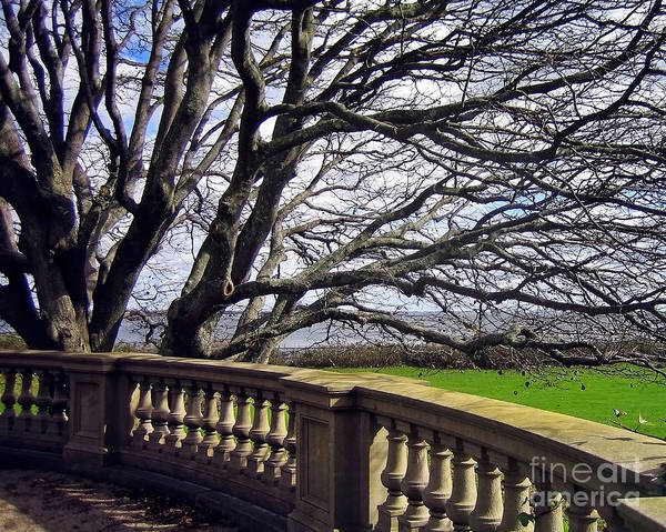 Photograph - Breakers Mansion Tree by Kate McKenna