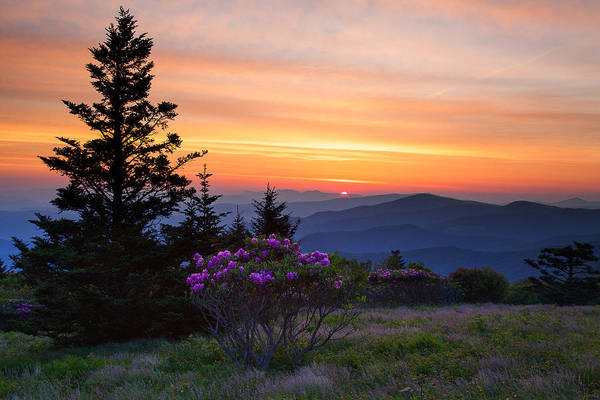 Rhododendrons Photograph - Breakfast On Roan Mountain by Nicole Robinson