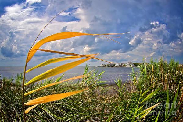 Photograph - Breezy Day On Long Beach Island by Mark Miller