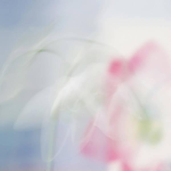 Photograph - Bridal Veil by Annie Snel