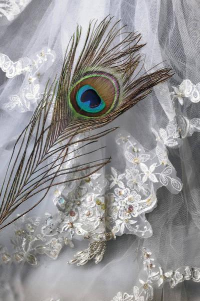 Peacock Photograph - Bridal Veil by Joana Kruse