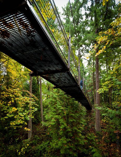 Photograph - Bridge In A Forest by Alexander Fedin