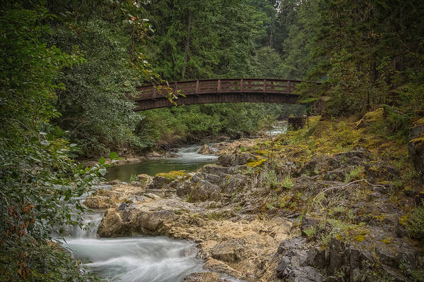 Photograph - Bridge In The Woods by Carrie Cole