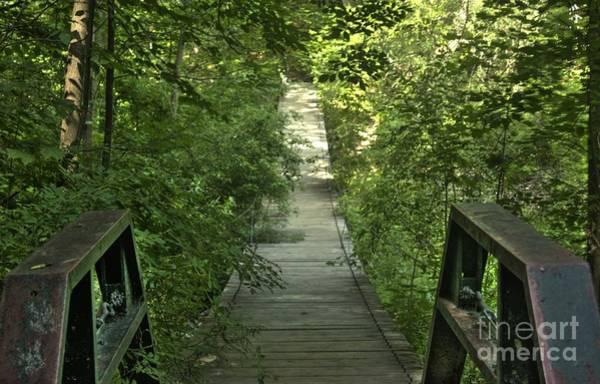 Bridge Into The Woods Art Print