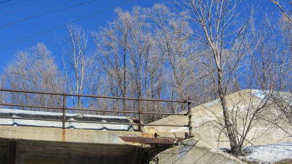 Photograph - Bridge Railing And Trees by Anita Burgermeister