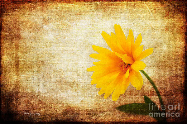 Photograph - Bright And Yellow by Randi Grace Nilsberg
