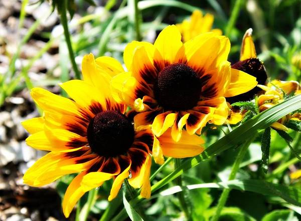 Photograph - Bright As The Sun by Rebecca Frank