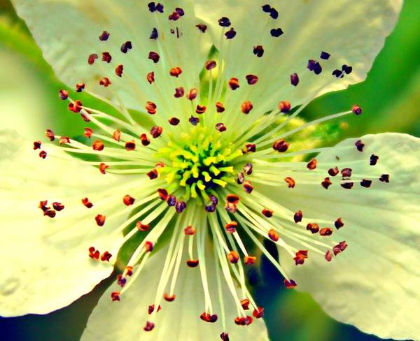 Photograph - Bright Bloom by Candice Trimble